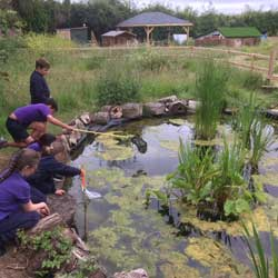 Pond Dipping in the Nature Garden